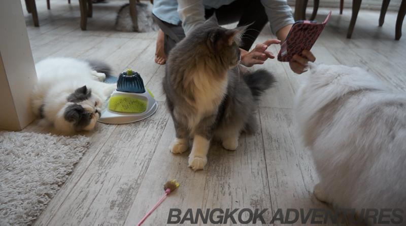 Purr Cat Cafe Club Bangkok