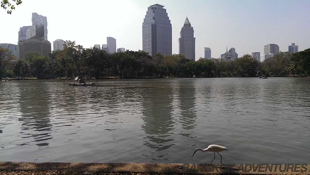 Bird at Lumpini Park
