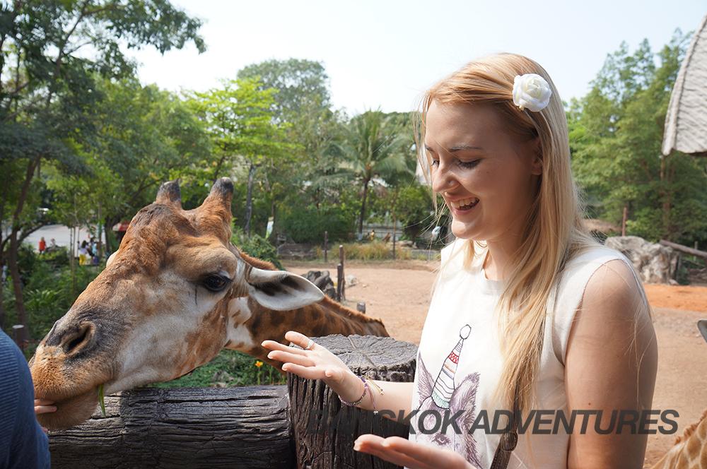 Giraffe Feeding at Dusit Zoo, Bangkok