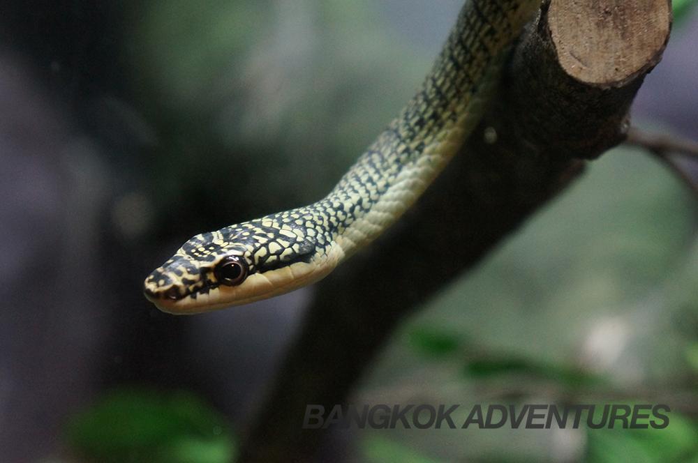Snake at Dusit Zoo, Bangkok, Thailand