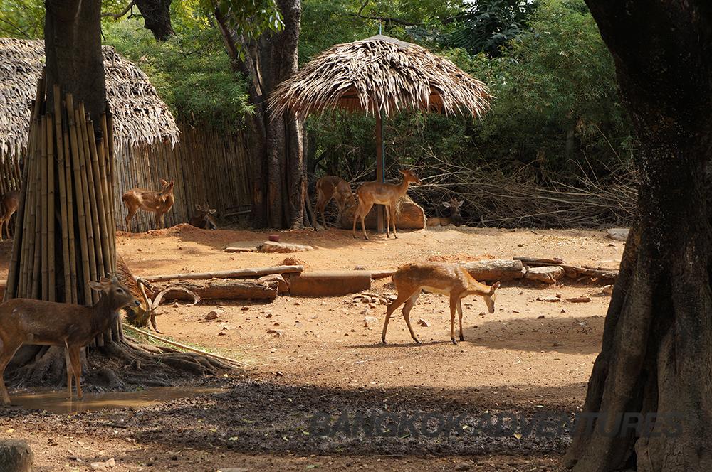 Deer at Dusit Zoo, Bangkok, Thailand