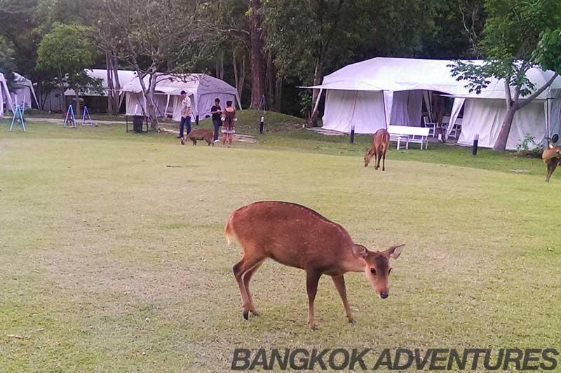 Es-Ta-Te Camping Resort and Safari
