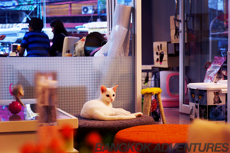 Cat Cafe by Dome, Bangkok