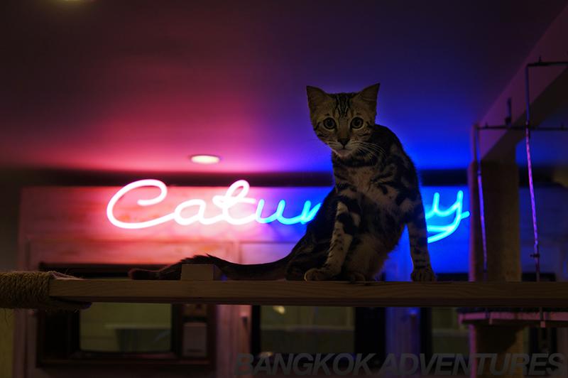 Caturday Cat Café