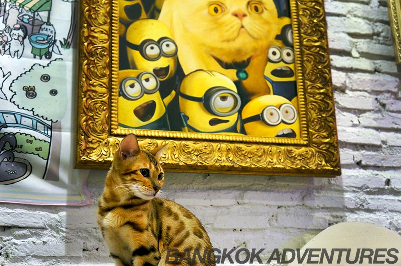 Caturday Cat Café in Bangkok