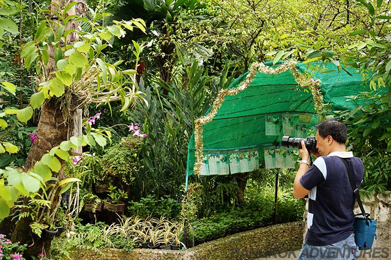 Photo opportunities at the Bangkok Butterfly Park and Insectarium