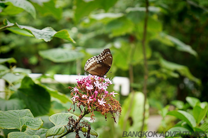 Butterflies pose for the camera at the Bangkok Butterfly Park and Insectarium