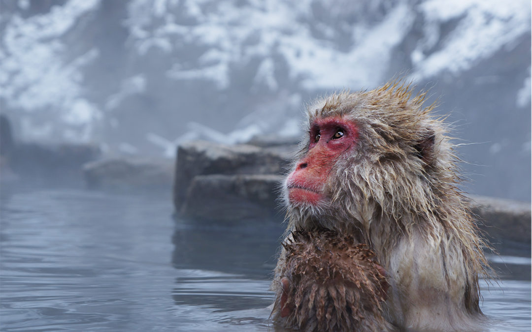 Creating The Photograph: Snow Monkey In A Hot Spring